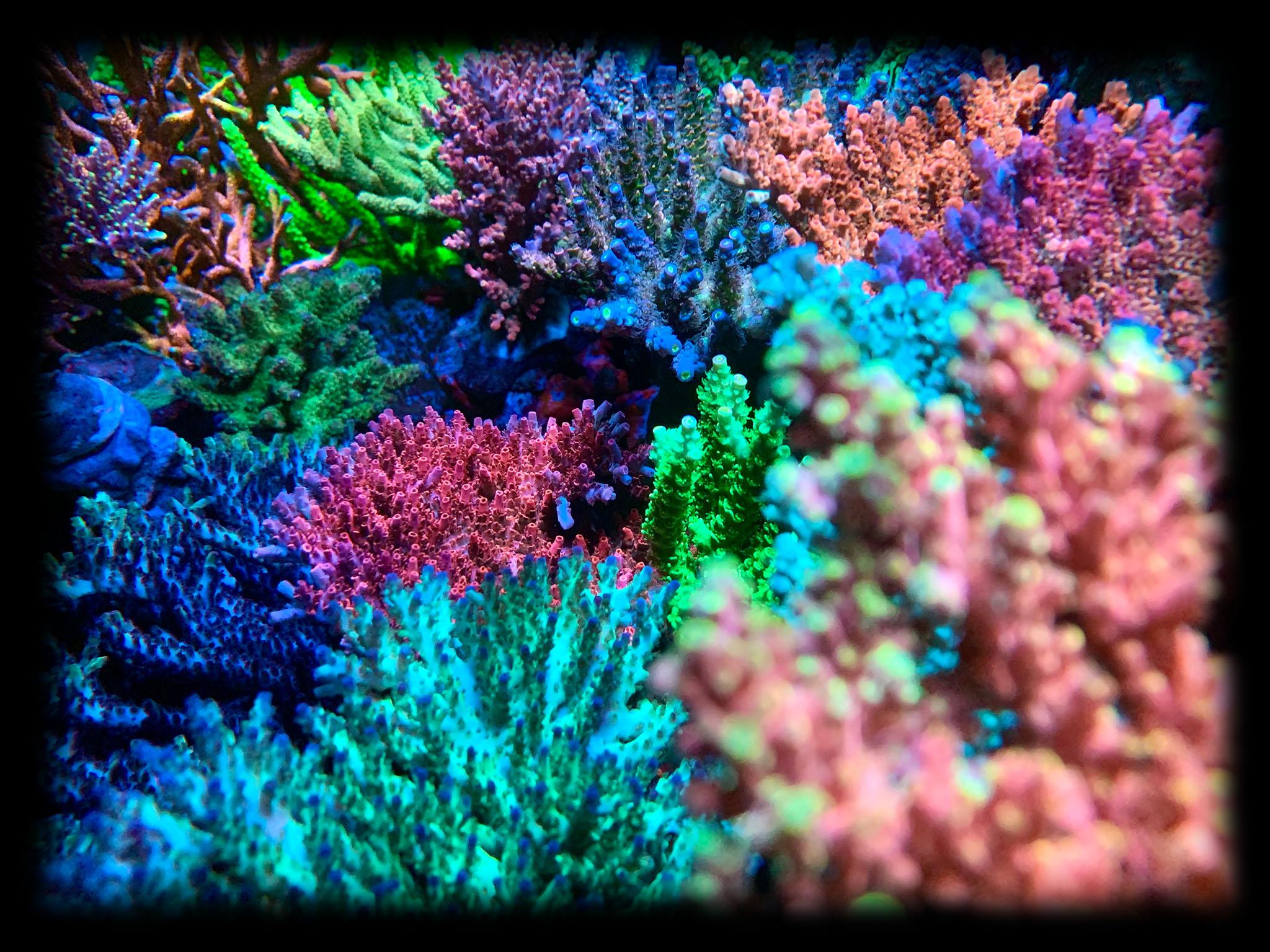 Reef View 360 Filter